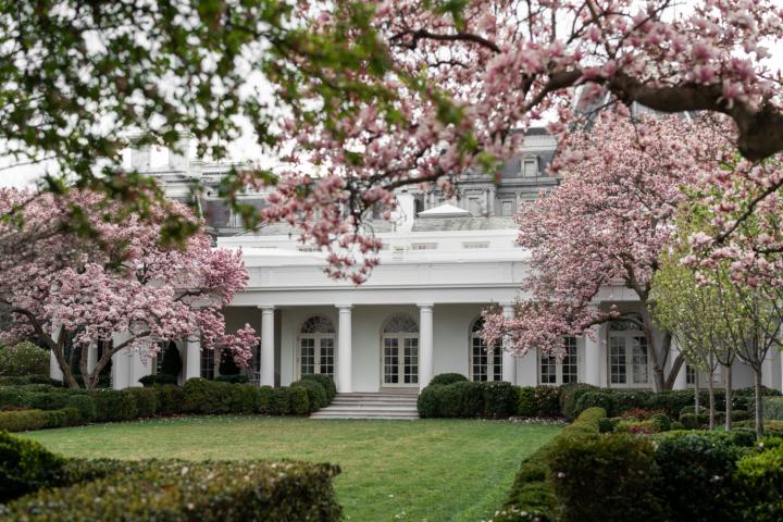Melania Trump S Revamped Rose Garden Is Rough Around The Hedges White House Garden White House White House Washington Dc