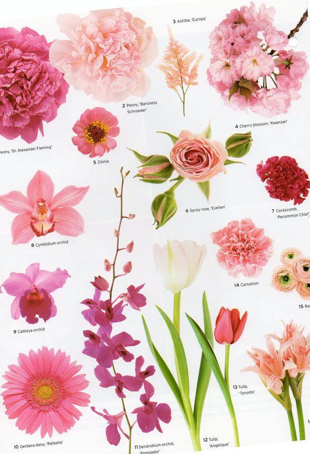 Matrimonial Meg Flower