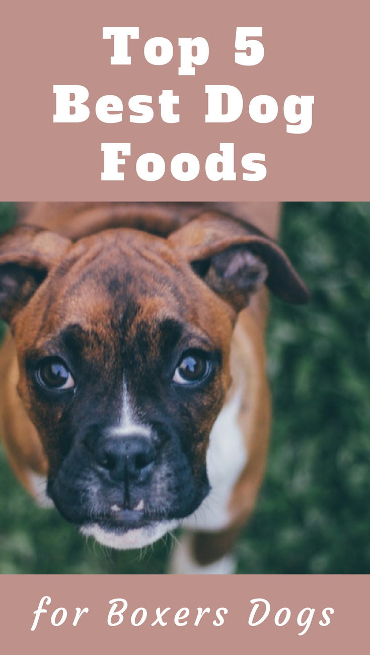 Top 5 Best Dog Food For Boxers To Pick On A Tight Budget Best Dog Food Boxer Dogs Boxer Dogs Facts