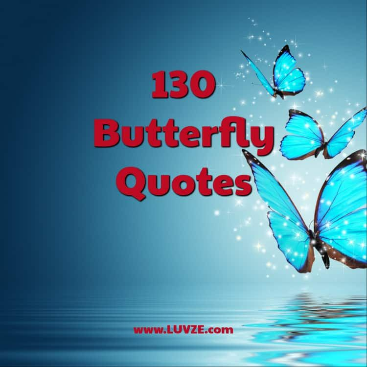 130 Butterfly Quotes and Sayings (With images) Butterfly