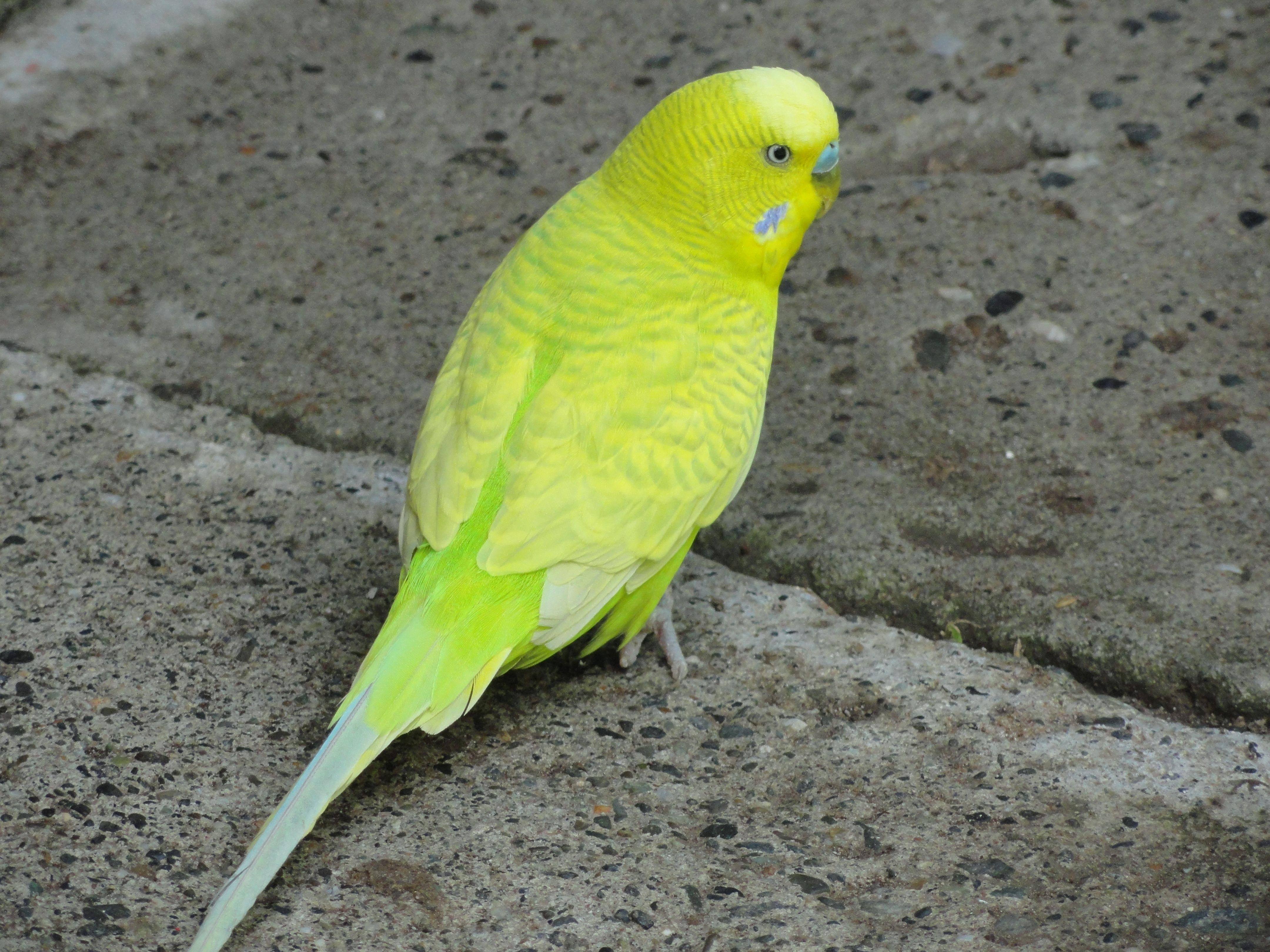 Bird / Pájaro - In Armenia, Colombia