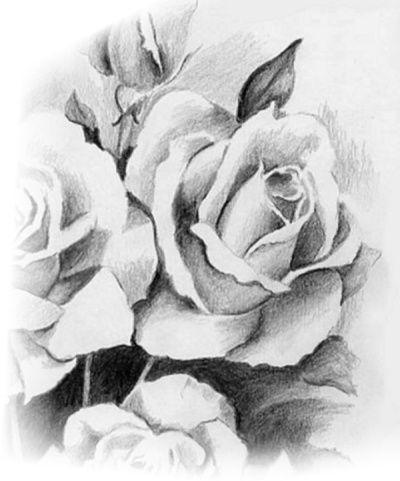 Desenhar Rosas Coisas Para Desenhar Flores Preto E Branco