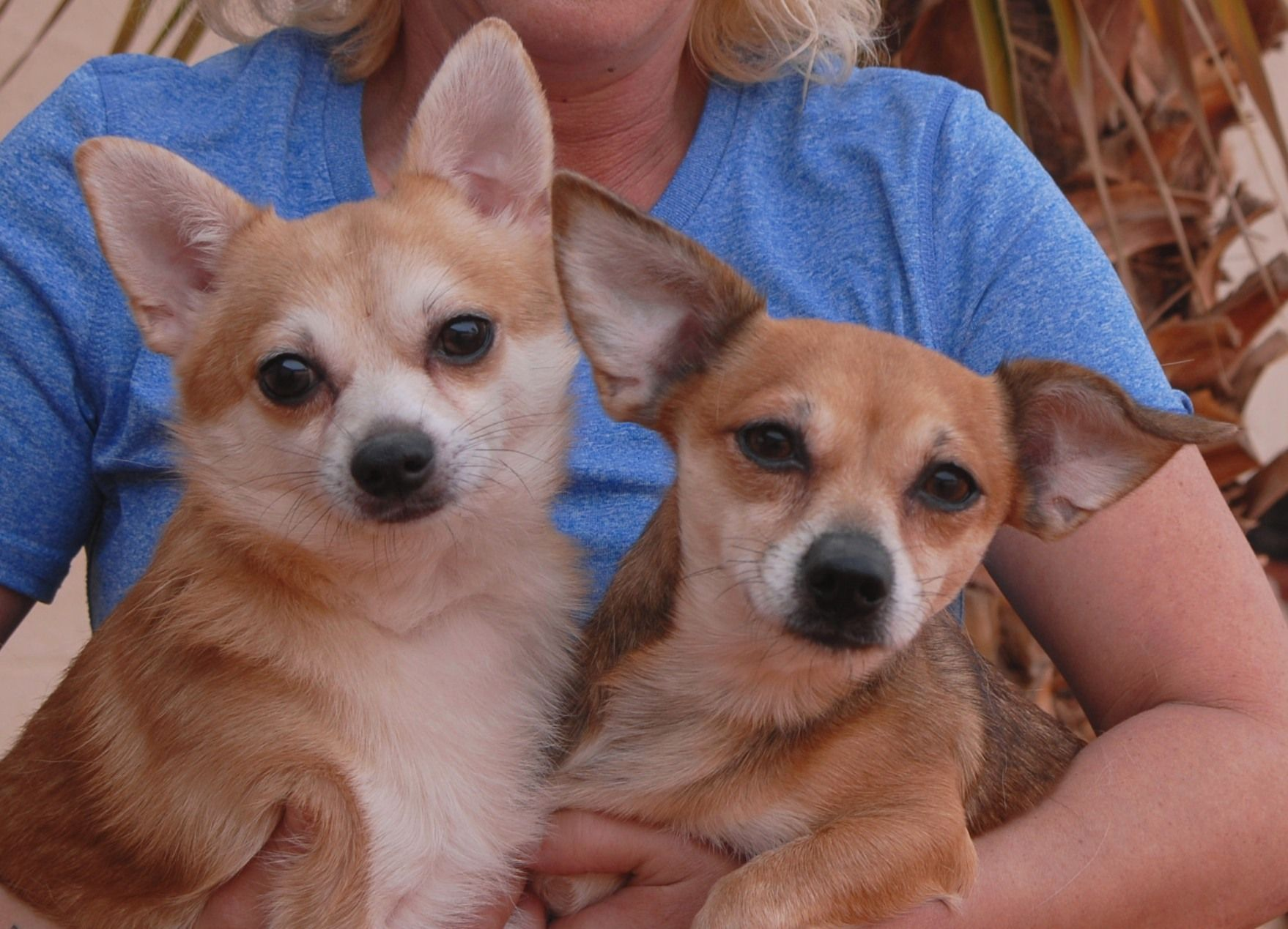 Atom & Reesey, soulmates reunited when rescued from