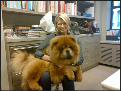 Martha Stewart And Her Chow Its So Fluffy Animals Pets Dogs
