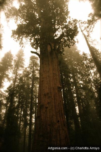 Mystic forest by Charlotta Arroyo