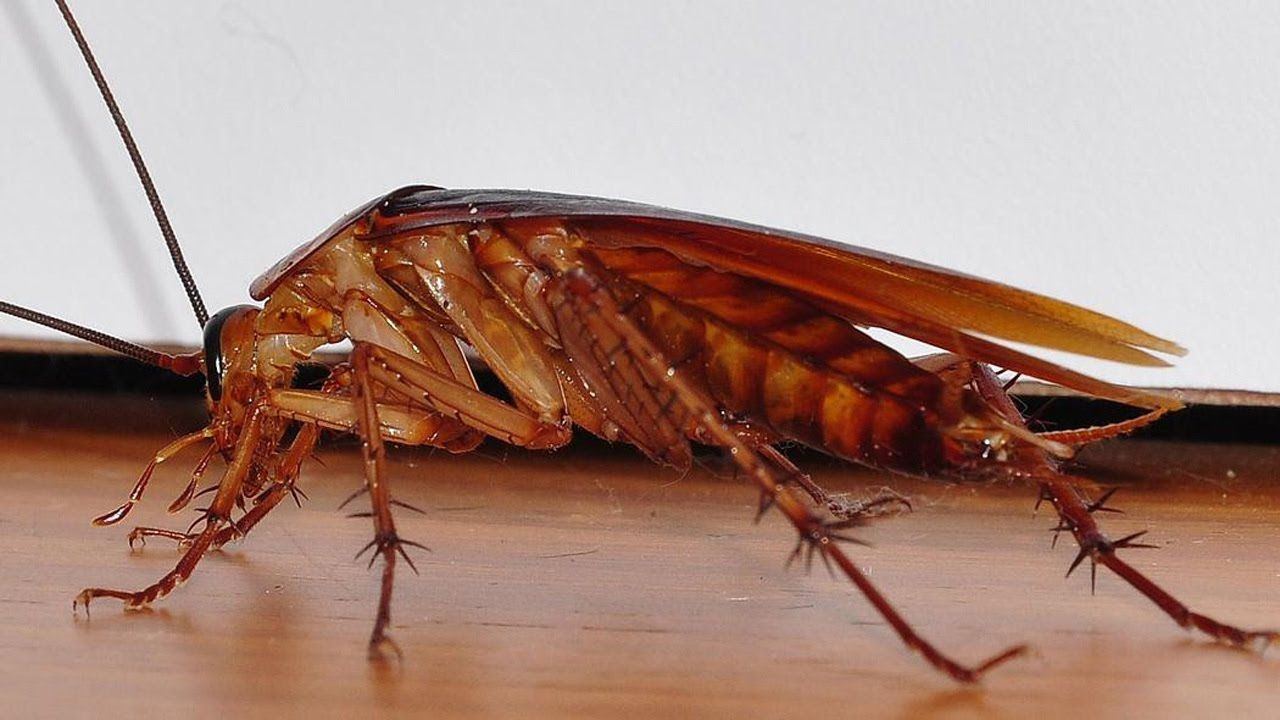 This Is The Most Effective Way To Get Rid Of Cockroaches