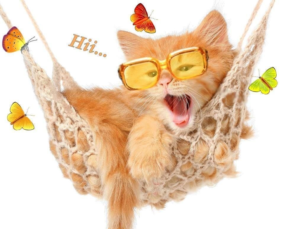 GATITOS Gatos, Casita para gatos, Mascotas