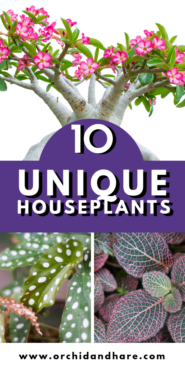 10 Rare Unique Houseplants You Will Love Includes Care Instructions House Plants Indoor Popular House Plants Easy House Plants