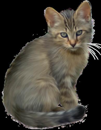 Cute Kitten Png Clipart Kittens Cutest Puppy Cartoon Kitten