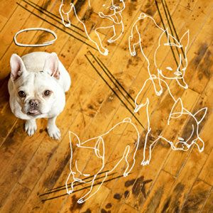 how to repair dog damage to wood flooring | photo illustration