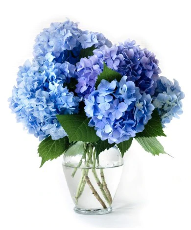 Light Blue Hydrangea Vase Blue Flower Arrangements Blue Flower Vase Blue Hydrangea Centerpieces
