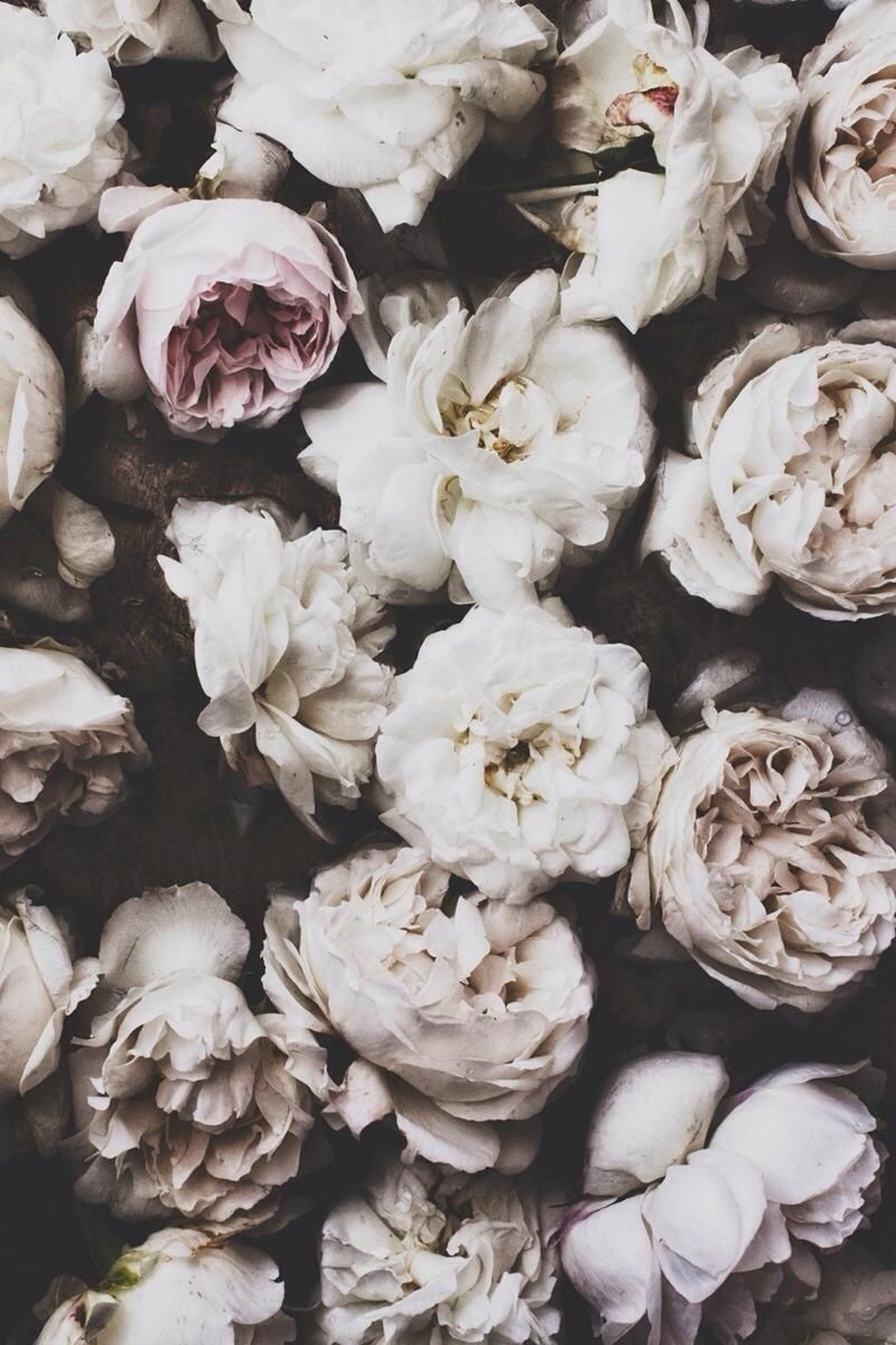 Cute Iphone Wallpaper Tumblr Google Search Flowers Floral Bloom