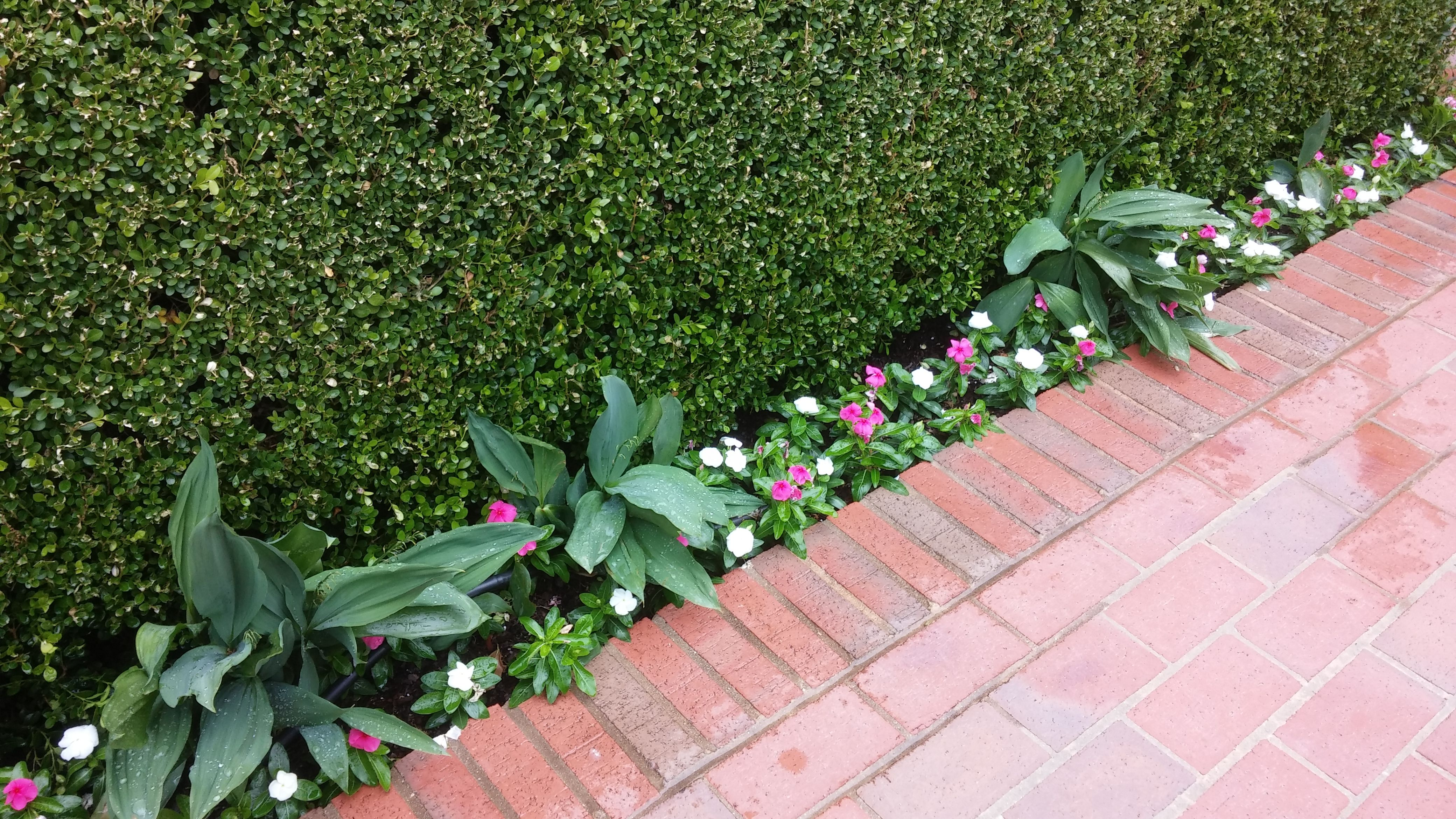 Pink and white vinca annuals create an attractive border along this pink and white vinca annuals create an attractive border along this brick pathway izmirmasajfo