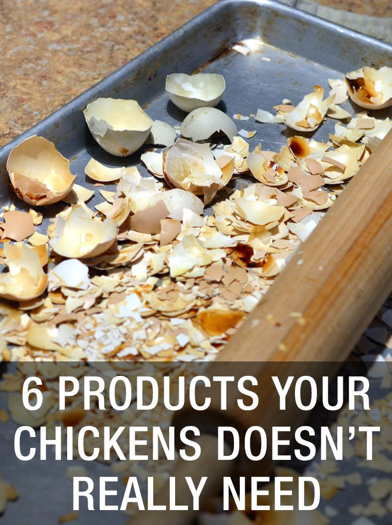chicken doesn t However, we'd bet that below we have compiled 20 surprising things even the  most seasoned chicken-keeper wouldn't know before reading.