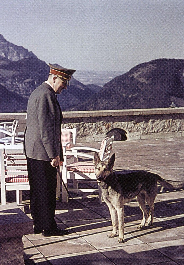 adolf hitler mit seiner sch ferh ndin blondi auf der terrasse des berghofs am obersalzberg. Black Bedroom Furniture Sets. Home Design Ideas