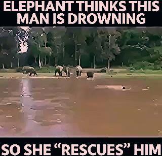 "Photo of #Elephant saves ""drowning"" man!"