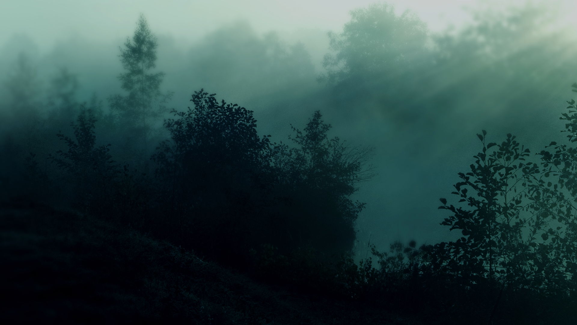 Download Wallpaper Nature Trees Dark Forest Mist Sunlight 1920x1080 Hd Wallpaper On Turnlol Hd Wallpaper 1920 Foggy Forest Forest Wallpaper Nature Wallpaper