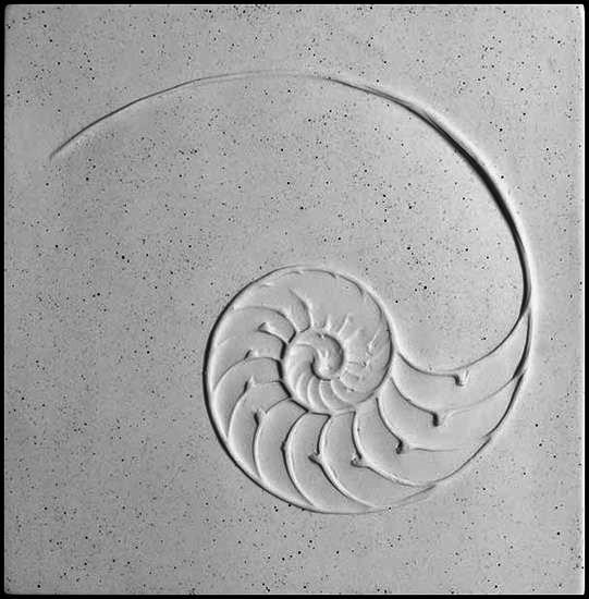 Nautilus A Symbol Of Evolution Strength And Mathematics Or