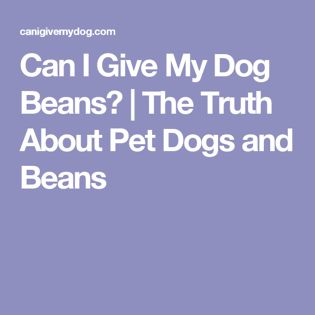 Can I Give My Dog Beans? | The Truth About Pet Dogs and Beans