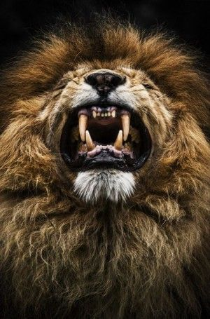 Lion. THE VERY NATURE OF BROWN