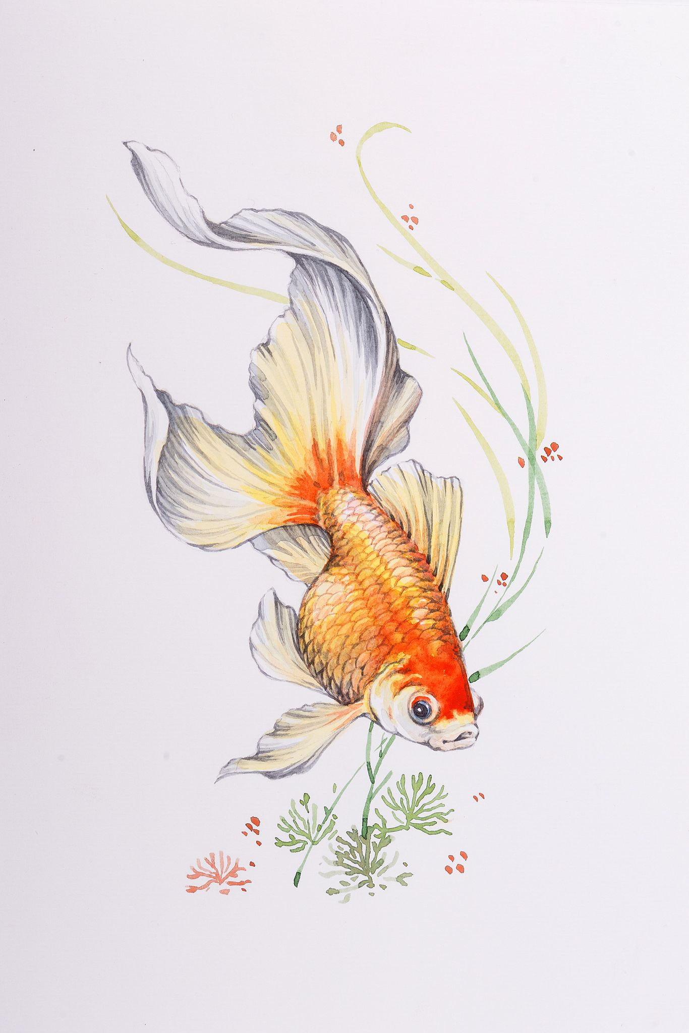 Golfish Watercolor Peintures De Poissons