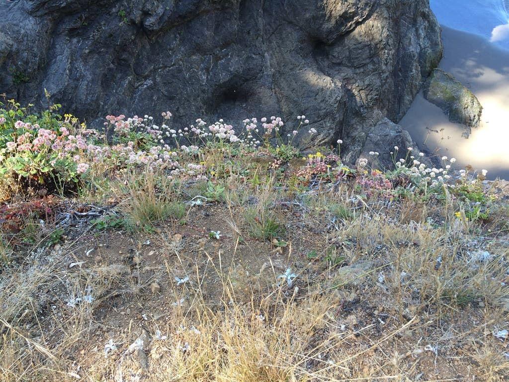 Oregon Coast Samuel Boardman State Park Boardman state