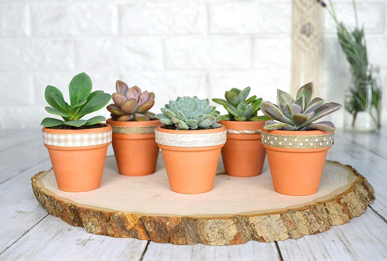 Amazon Com My Urban Crafts 20 Pcs Small Mini Clay Pots 2 1 Mini Terracotta Pots Clay Ceramic Pottery Planter Terra Cotta Clay Pots Succulent Pots Clay Pots