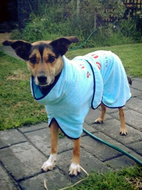 Review of the Surf Dog Australia Beach Robe | a summer | Pinterest ...