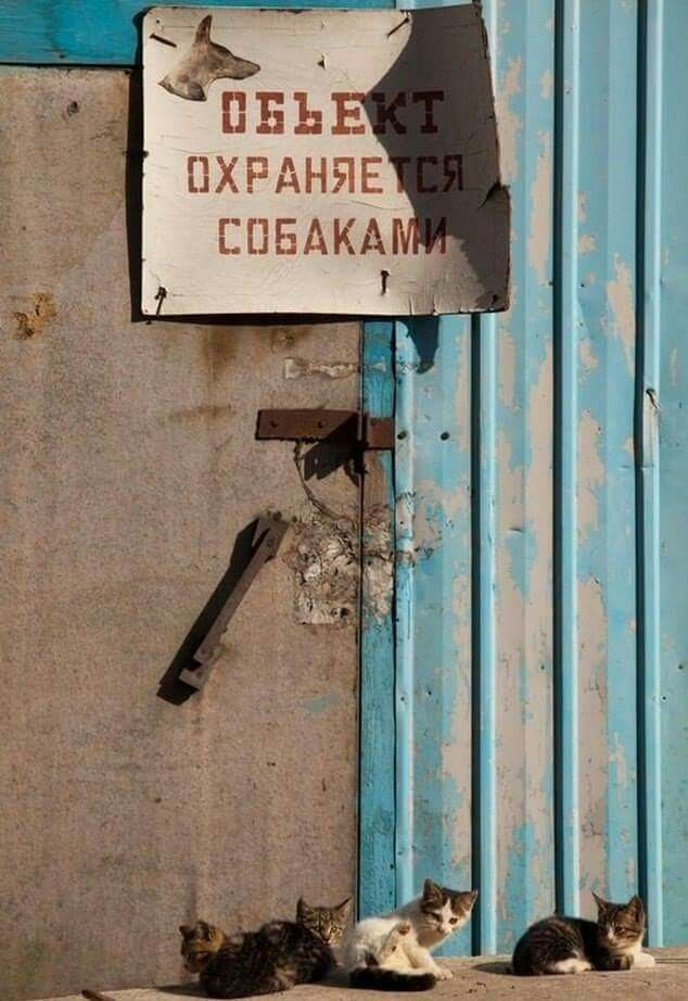 """""""Territories protect by angry dogs"""" the writning on the door"""
