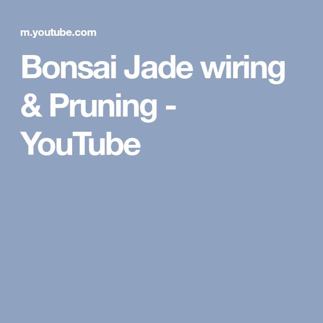Tremendous Bonsai Jade Wiring Pruning Youtube Jade Plant Bonsai Pruning Wiring 101 Photwellnesstrialsorg