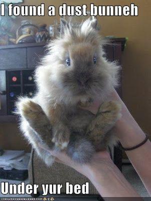 Funny Bunny Memes Funny Bunnies Bunny Meme Funny Rabbit