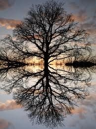 Tree of life -- archetypal power of this repin makes it a compelling image of life and nature!