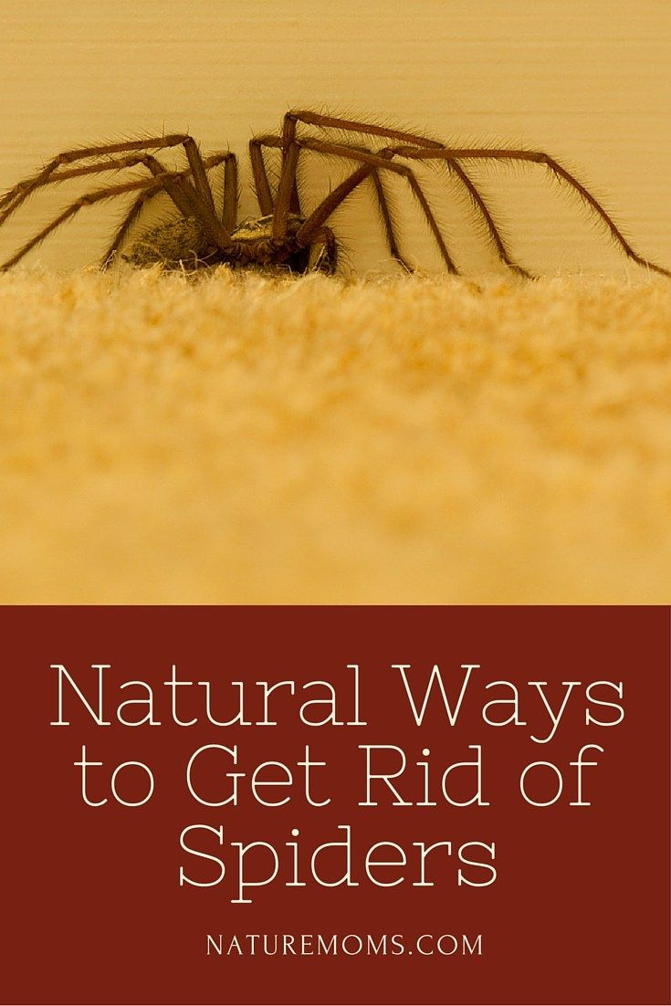 Natural ways to get rid of spiders with images get rid