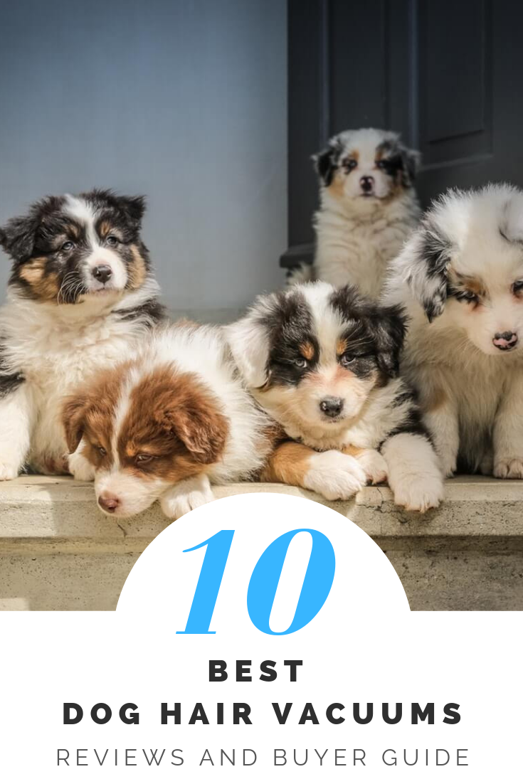 10 Best Dog Hair Vacuums Reviews And Buyer Guide 2019 Pet Owners Dog Hair Vacuum I Love Dogs