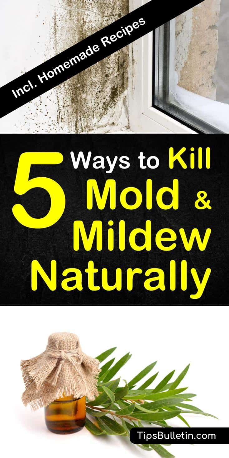 5 smart ideas to kill mold and mildew naturally mold