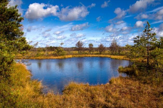 Pelkė rudenį - Karolis Stankūnas - Aukštumalos pelkės ežerėlis, Lietuva.