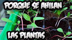 4 Semillero Youtube Semillero Plantas La Huertina De Toni