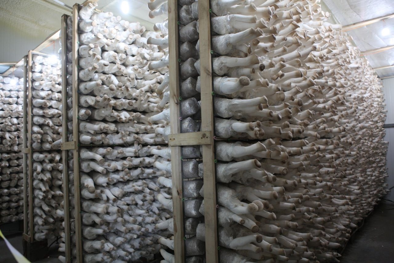 mushroom farm - Google Search | Gardens | Stuffed ...