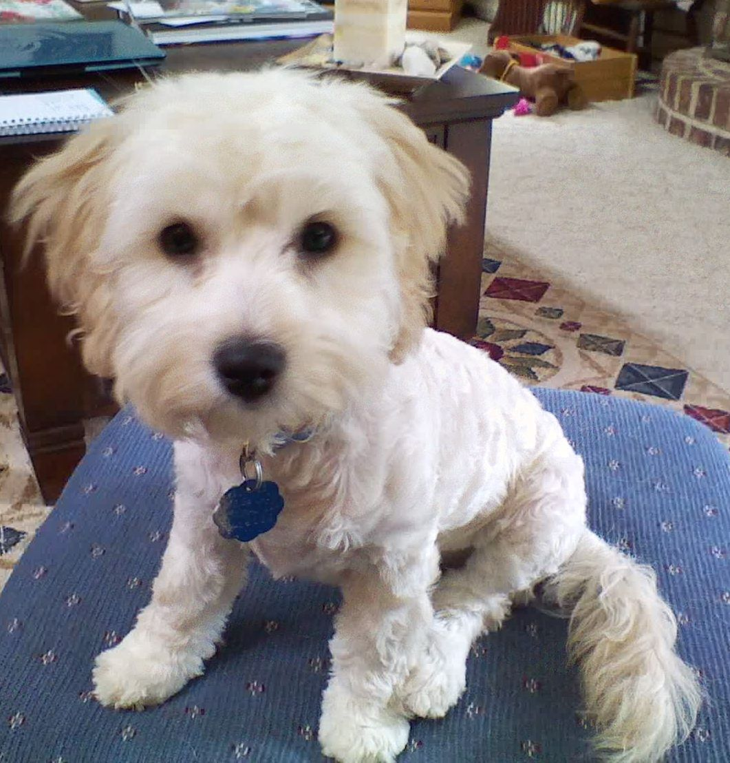Pin By Lynne Lee On Animals And Pets Teacup Puppies Cute Animals Pets