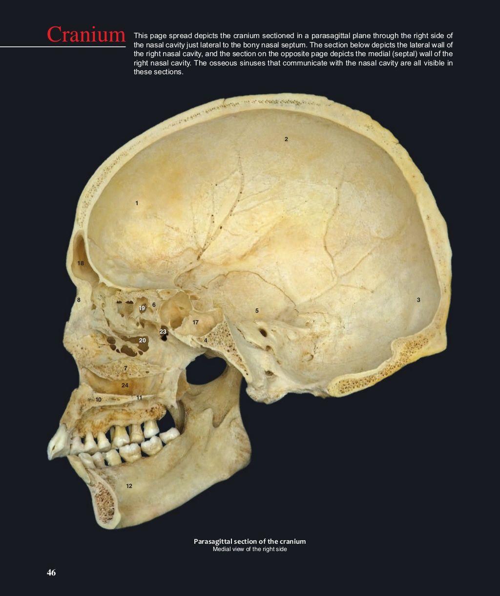 47 1 Frontal Bone 2 Parietal Bone 3 Occipital Bone 4 Sphenoid Bone 5