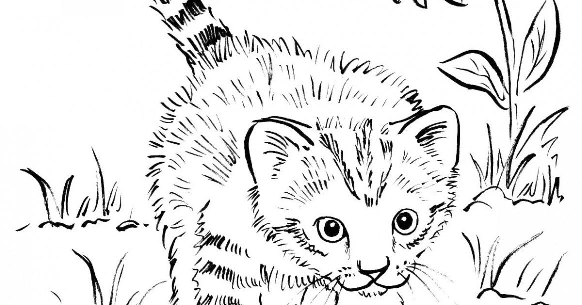 Cute Kitten Coloring Pages Idea