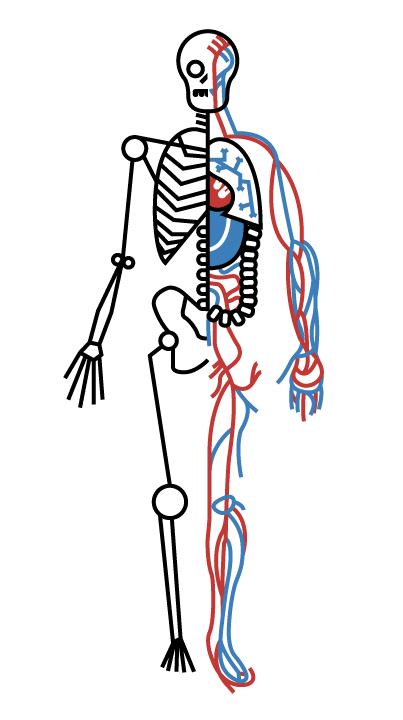Dribbble Humanbody Png By Joshua Rainwater Human Body Body Human