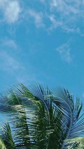 Fond d'écran iphone vidéo Photography photographie photo coconut tree palm sky idée maison