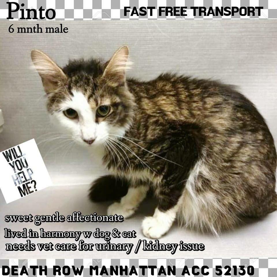 catsrangels2 🐈🌸🌷🐶🍂 ️🍁 on Cats, Cats, kittens, Foster cat
