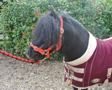 Ruggles Horse Rugs Shetland Pony