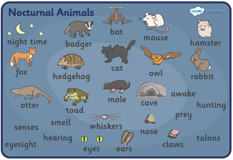 11++ What are nocturnal animals images
