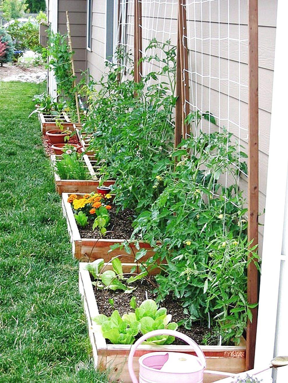 56 Very Beautiful Backyard Vegetable Garden Designs Ideas In 2020 Small Vegetable Gardens Home Vegetable Garden Vegetable Garden Raised Beds