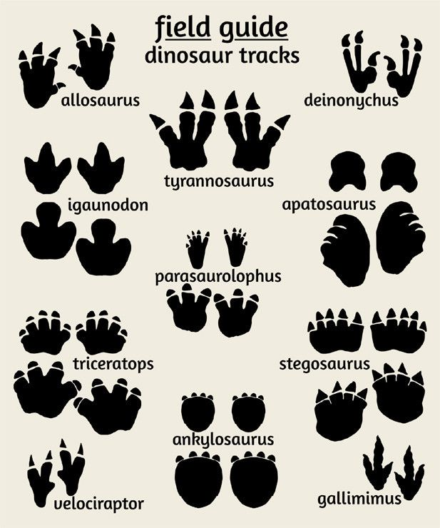 Dinosaur Art Print Footprints Poster