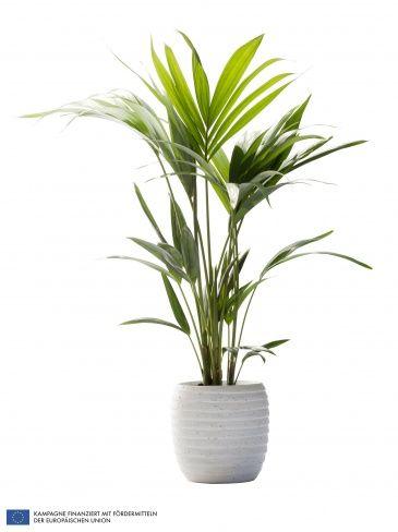 palme wohnzimmer – abomaheber, Hause deko