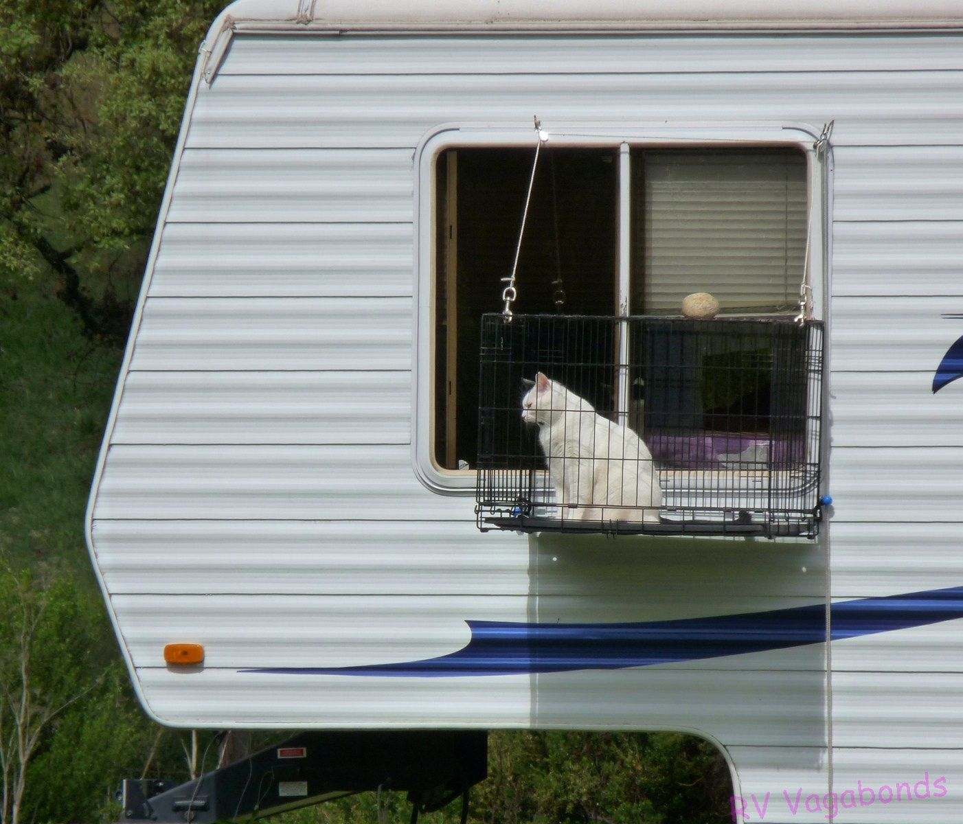 Rving With Cats Lol Luna Would Be Either Pissed Or